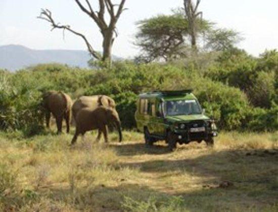 Outset Safaris