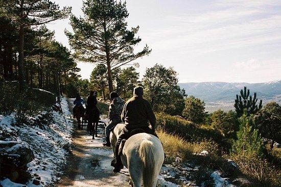 Paseos a caballo por el Parque...