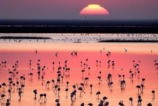 多纳纳国家公园:塞维利亚4x4导游一日游