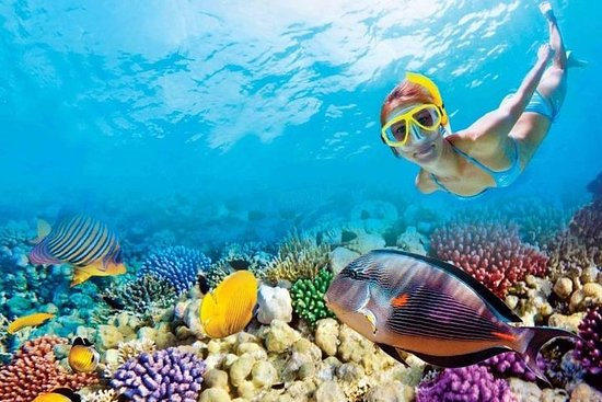 Full-Day Key West Tour and Coral Reef...