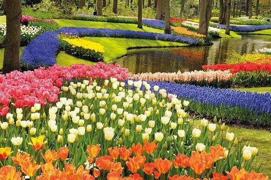 Visite privée: visite des tulipes...