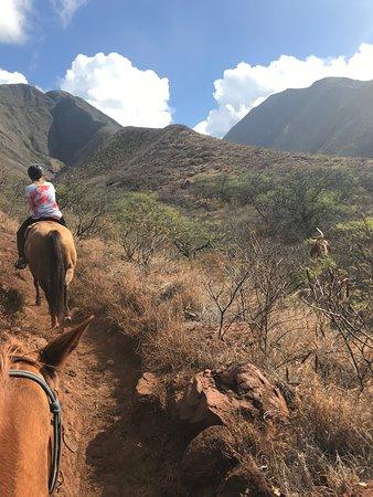 Lahaina Stables Manhã Passeio Histórico: riding into the mountains