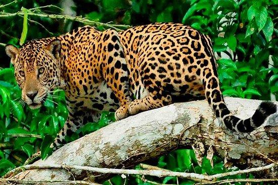 库斯科的7天Manu国家保护区