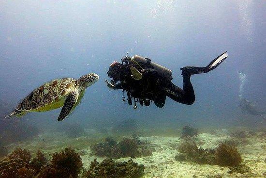 Bohol Cours de plongée