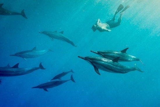 Snorkel par Wild Dolphins, Garantie...