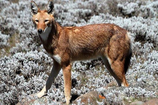 Parc national des montagnes de Bale...