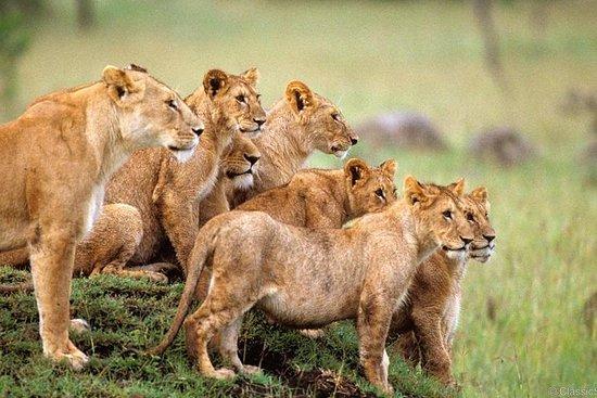 Safari de 3 jours au sanctuaire des...