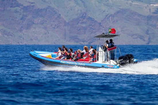 Dolfijn - Walvis - Schildpad - Vogels ...