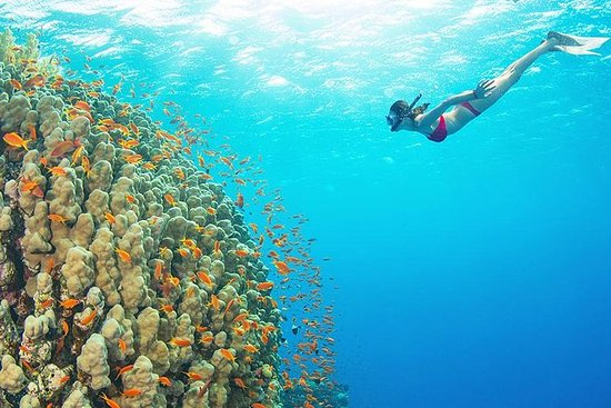 Pacific Boat-Premium Snorkeling By...