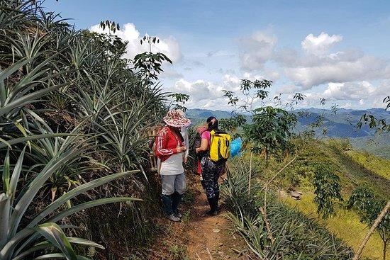 キナバル山の先住民を発見する