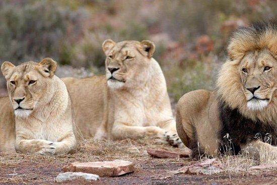 One Day Safari
