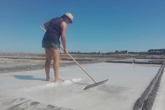 Visite de Coimbra à Figueira da Foz en rizières et salines