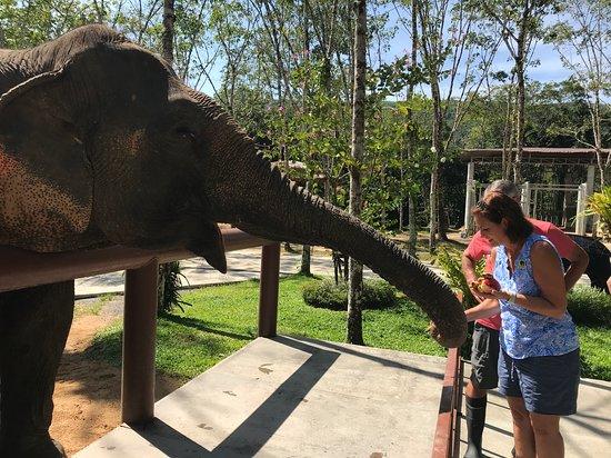 Una mañana con los elefantes en el santuario de elefantes de Phuket: Great day at PES