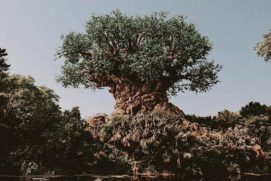 Privétour bij Disney's Animal Kingdom