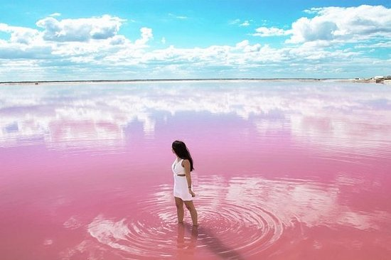 Las Coloradas Rio Lizards