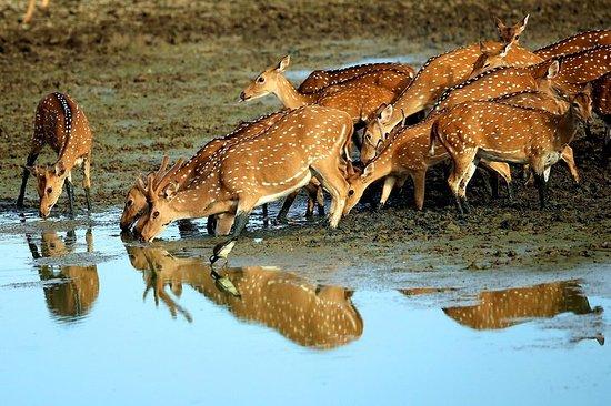 Mélangez-vous avec la faune au Sri...