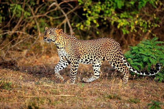 Half Day Safari at Yala National Park...