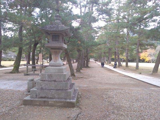 Pine Entrance Path