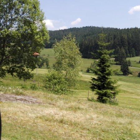 Lahr, Alemania: La foresta Nera! Bellissimi panorami e sentieri dove puoi fare lunghe passeggiate.