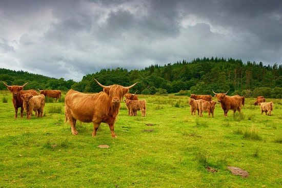 Visite privée de luxe dans les Highlands écossaises avec chauffeur...