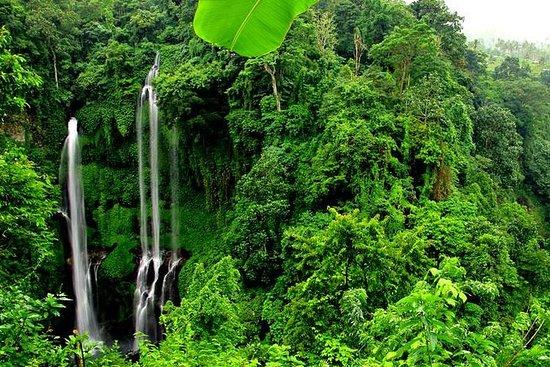 Cachoeira Sekumpul Trekking