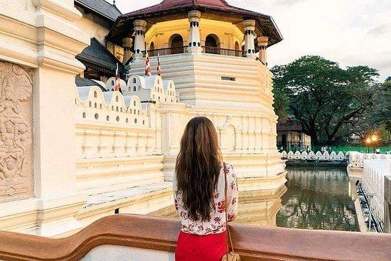 Excursion d'une journée à Kandy au...