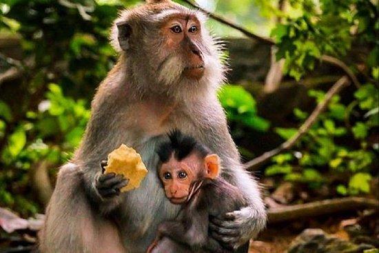 Dia inteiro: Floresta dos Macacos...