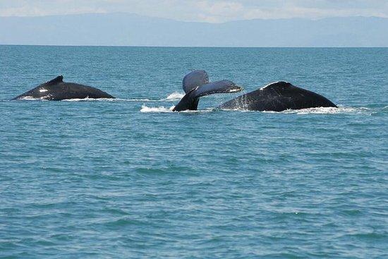 Observation des baleines (Avistamiento de Ballenas) Un jour de San...