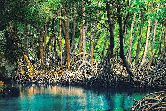 Playa de Los Haitises Plus Rincon con...