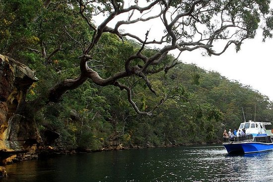 Ku-ring-gai Chase National Park Day Trip from Sydney