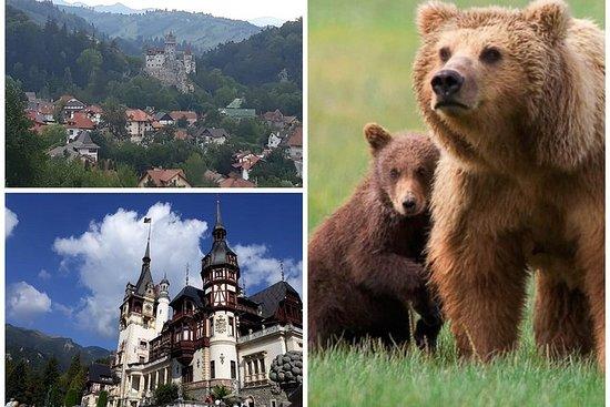 Valokuva: 2 Days Private Transylvania Tour:Peles& Dracula's Castle, Prejmer&Bear Sanctuary