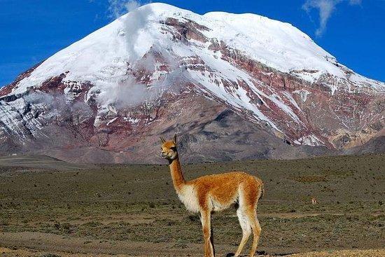 Chimborazo Tour vanuit Baños: Hiking ...
