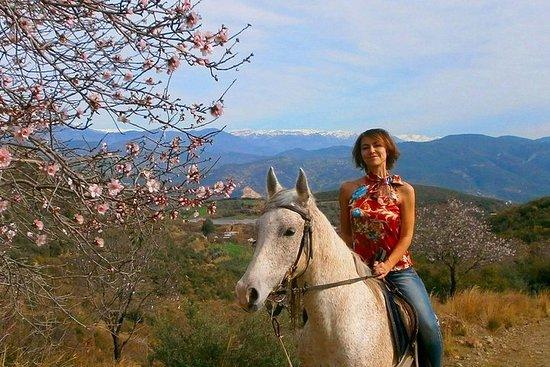 Alanya 3 Hour Horse Back Riding