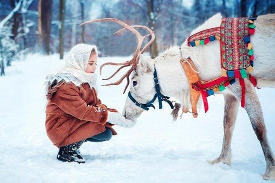 Vip Trip to Reindeer Farm con guida privata in auto Lux