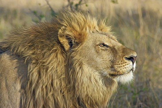 Ultimate Asiatic Lion Safari & Temple in Gujarat per 7 giorni