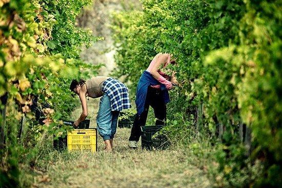 索倫托全天小團體龐貝之旅,品嚐當地葡萄酒