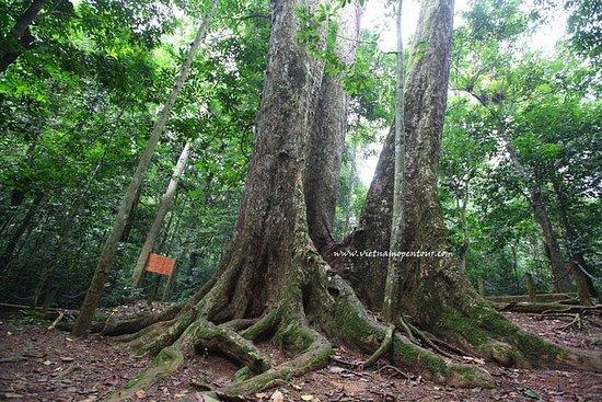 Parc National Cuc Phuong visite à la...