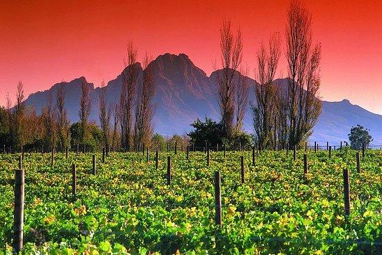 Cape Winelands e la Garden Route - 5 giorni