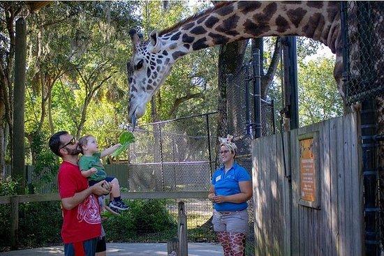 Family Zoo-besøk med lunsj og transport fra Orlando