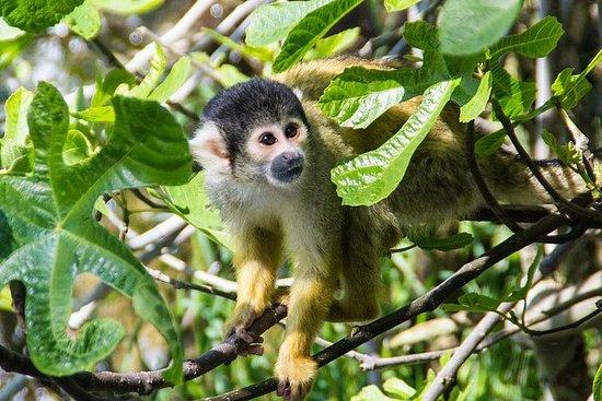 Los mejores destinos de Costa Rica en un paquete especial de 8 días
