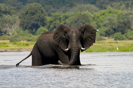 Chobe ganztägiger Safari Trip