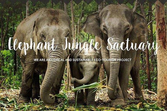 Pattaya: Elephant Jungle Sanctuary mit Hin- und Rücktransfer