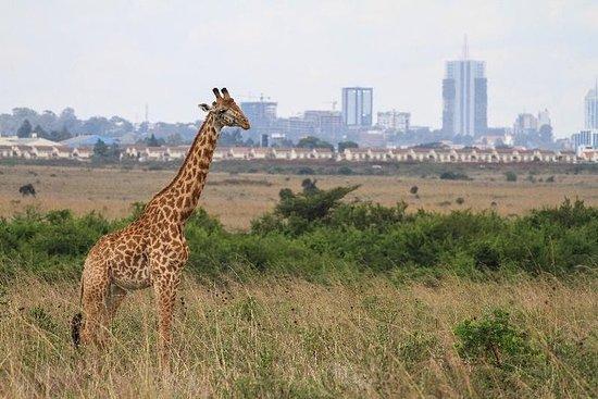 Nairobi nationalpark, elefanthemmet ...