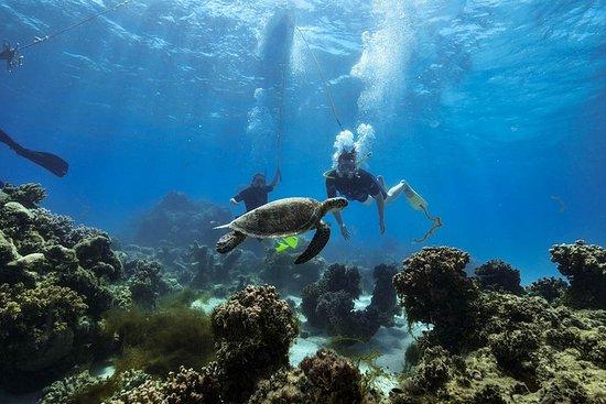Green Island Day Trip from Cairns Including SNUBA or SNUBA Doo Experience – fotografija