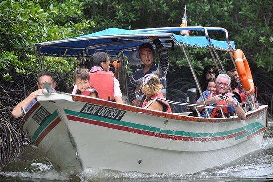 Halvdag Mangrove Safari Båttur i...
