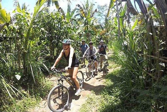 Excursão de bicicleta ecológica em...