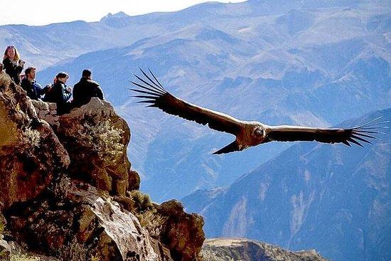 Arequipa - Colca Canyon - Arequipa...