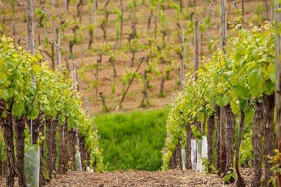 Wijnroute van de Elzas: Tour van een ...