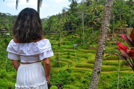 Foto Ubud Monkey Forest - Ubud Market - Swing - Rice terrace - Waterfall