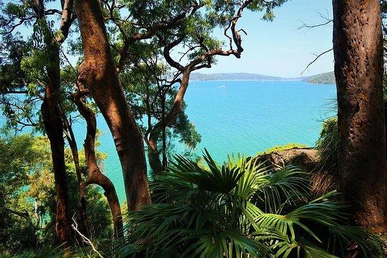 Bush And Beach Day Tour: Ku-Ring-Gai Chase National Park and Palm...